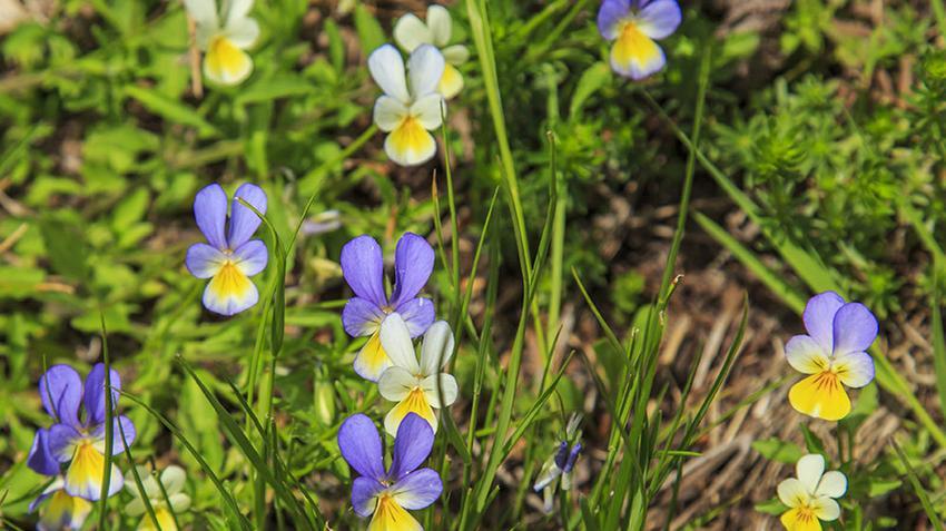 + Best Gyógynövények sokféle bajra images in   gyógynövények, egészség, fűszernövények