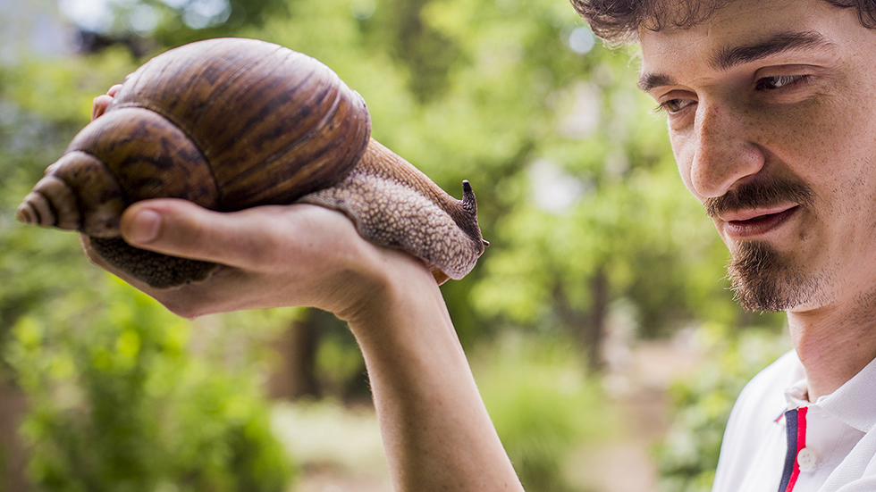 Csigát kell enni alultápláltság és vashiány ellen?