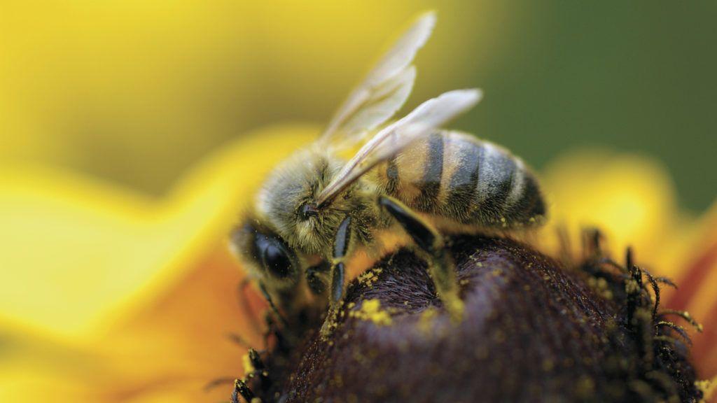 Méh előesés pszoriázis kezelésére