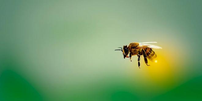 pikkelysömör kezelése méhek által