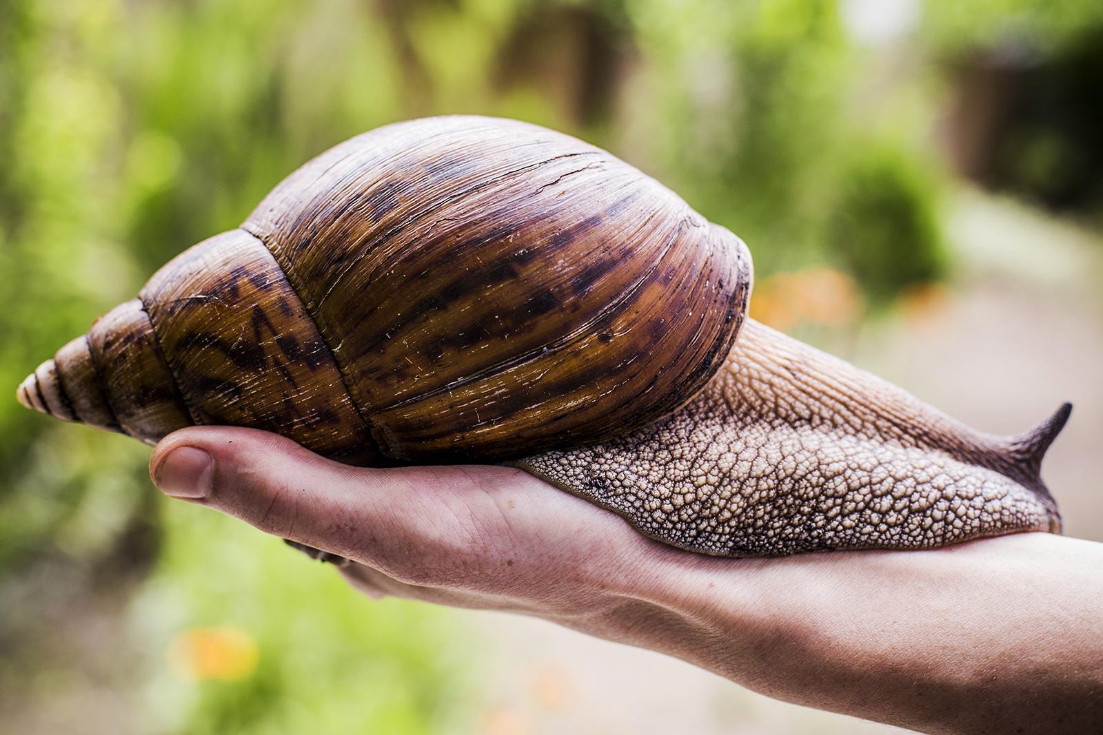 Milyen a csiga nyálka az emberi bőr számára? - Hús November